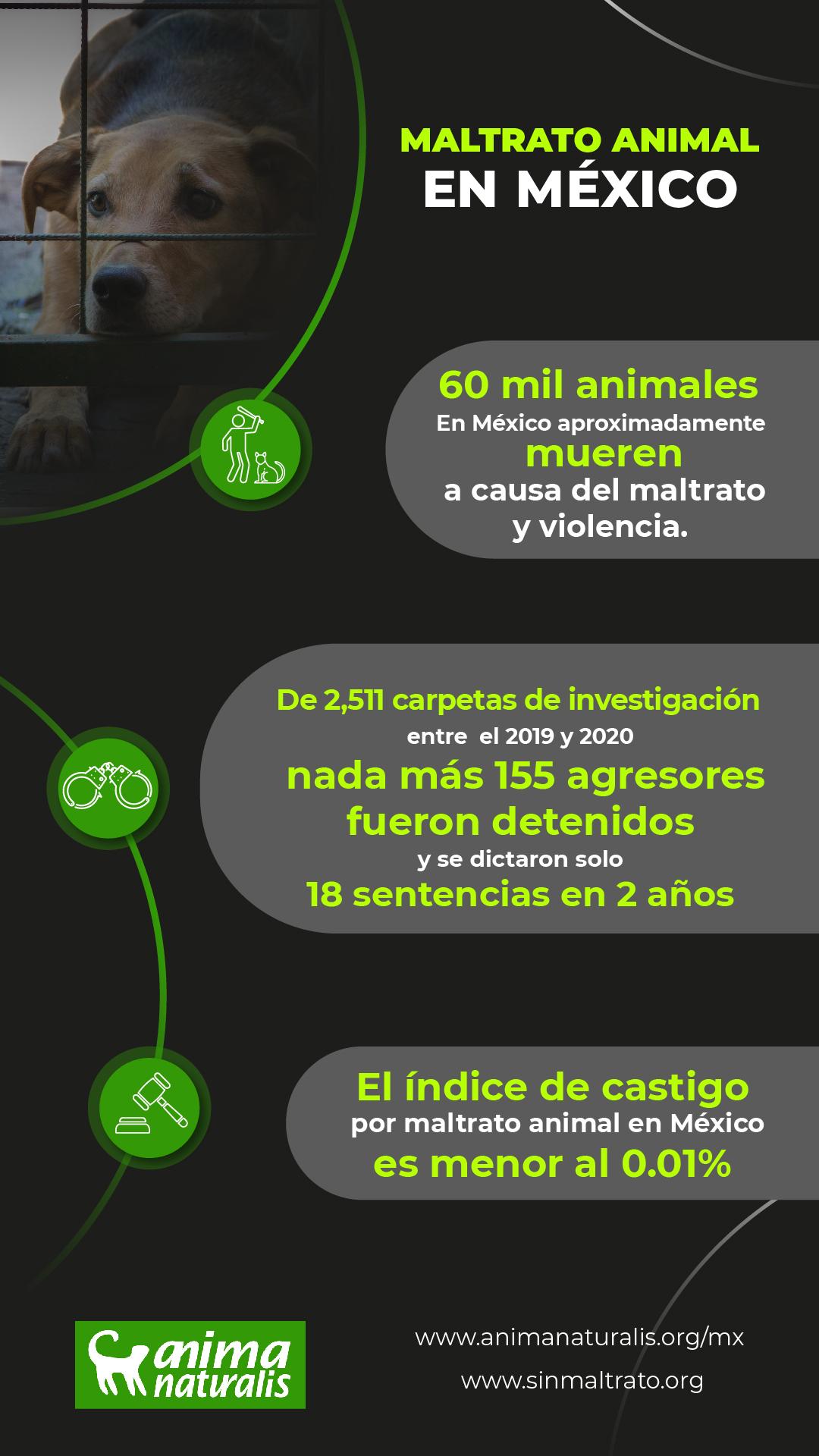 Maltrato animal en México