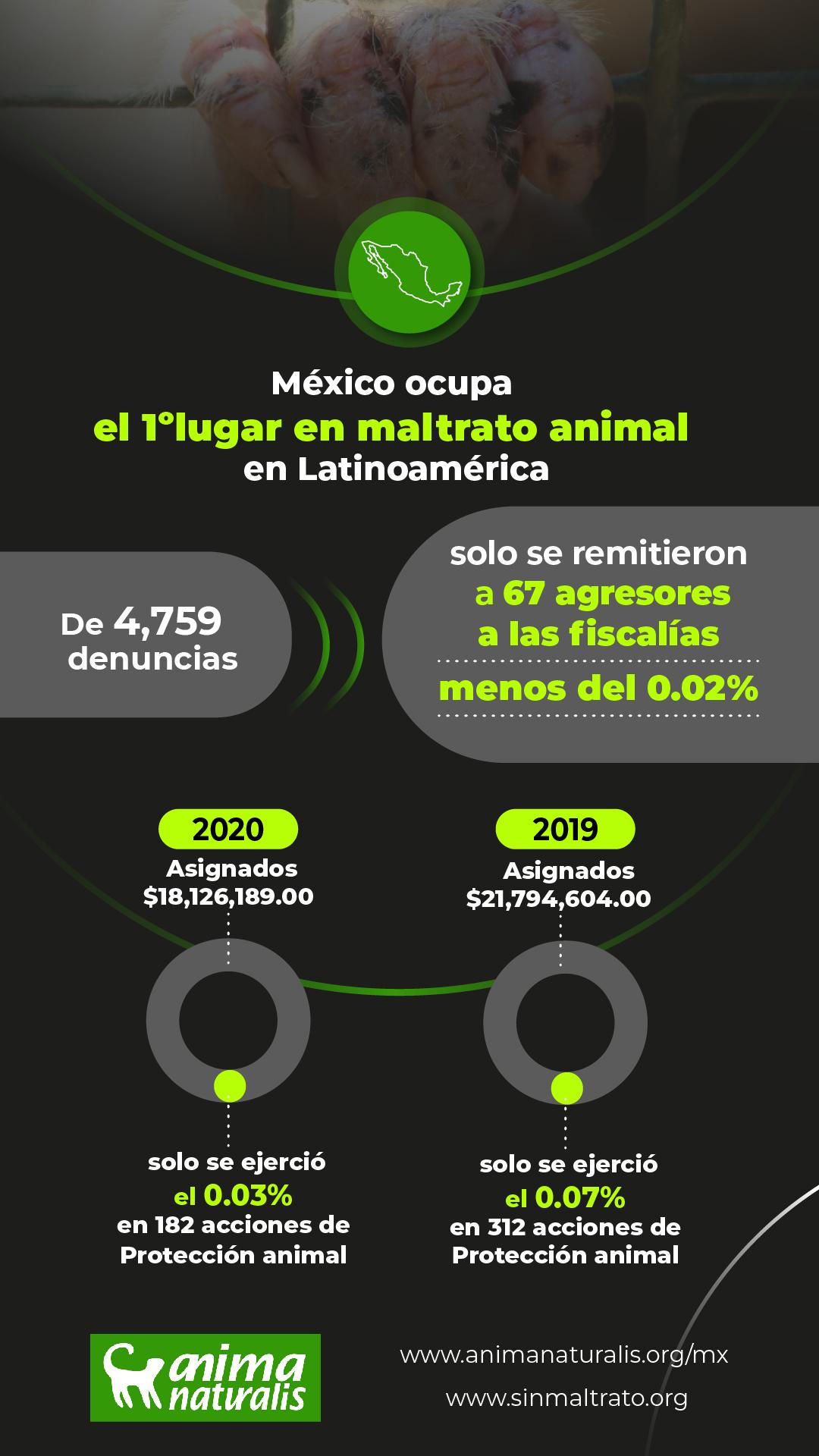 México: en el primer lugar de maltrato animal